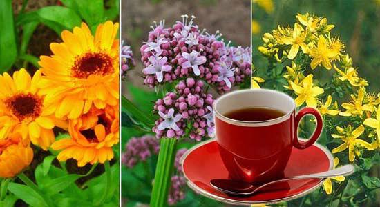 сердечный монастырский чай фото