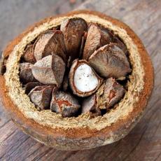 бразильский орех бертолетия фото