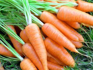 польза сырой моркови фото
