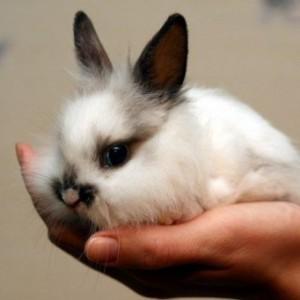 Как приучить кролика к рукам?