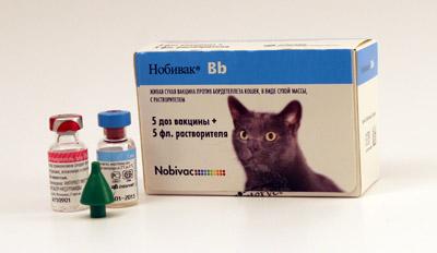 Вакцина Нобивак для кошек – применение препарата, схемы вакцинации