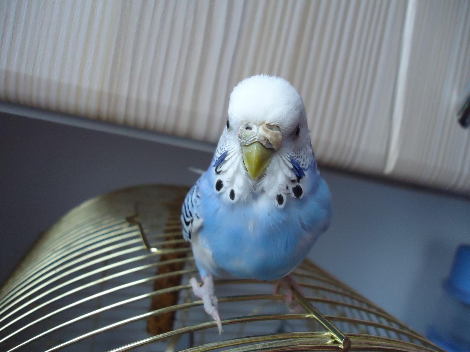 У попугая наросты возле клюва - что делать в таком случае?
