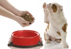 Корм Монже для собак – списание, преимущества
