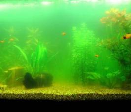 Мутная вода в аквариуме: что делать? Правильные советы