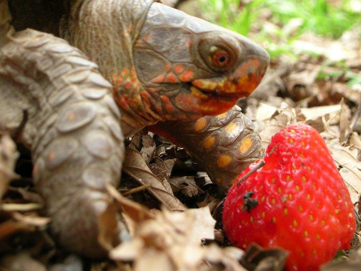 Что делать, если черепаха не ест?